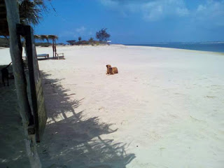 Photo of Experience The Beauty of Lamu Island at Affordable Travel Price